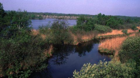Naturschutzgebiet Nordufer Plauer See
