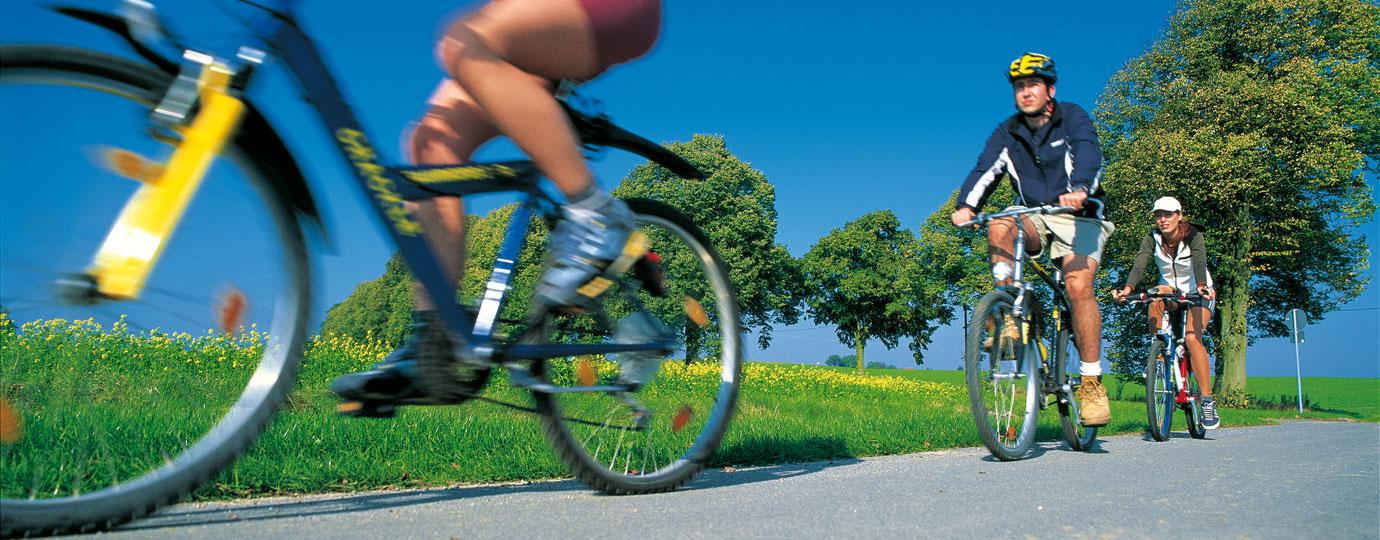 Radfahrer radeln an einem Rapsfeld vorbei, Mecklenburgische Seenplatte