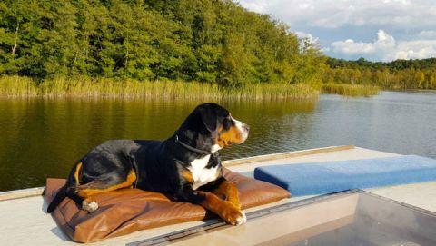 Hund auf dem Hausboot
