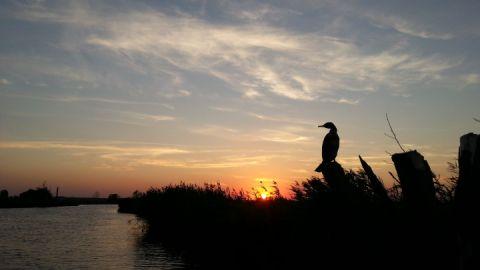Ingo Ernst Abenteuer Peenetal Kormoran mit Sonnenuntergang